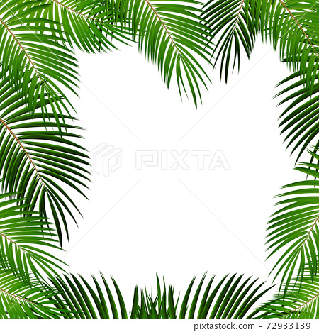 Palm Leaf on White Background with Place for Your Text Vector Illustration 72933139