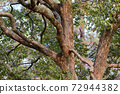 brownish tree branches in winter 72944382