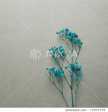 Blue baby's breath, gypsophila dry flowers on gray background. top view, copy space 72947749