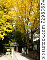 Ginkgo's autumn leaves 72985674