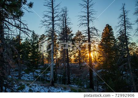 Golden sunlight through pine trees in winter 72992906