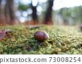 躺在福岡山上的苔蘚上的橡子 73008254