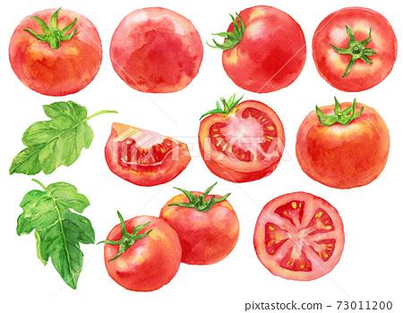 水彩番茄材料 73011200