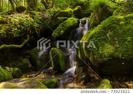 Mossy Valley, Gangwon Province 73023822