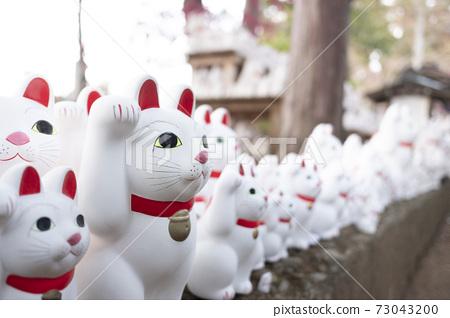 東京五德寺的特邀貓 73043200