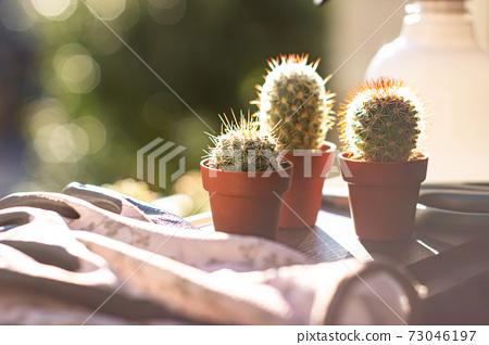 園藝形象與迷你仙人掌(多版本)和園藝用品在早晨的陽光下 73046197