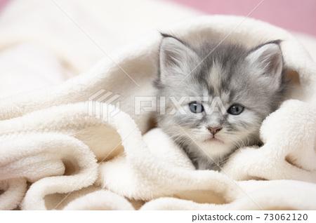 主庫恩小貓裹著毯子 73062120