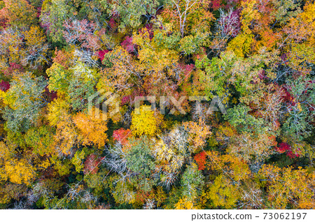 Fall Foliage from Above 73062197