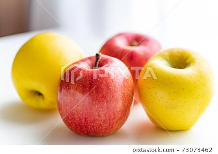 가을의 미각 사과 산후지와 시나노 골드 73073462
