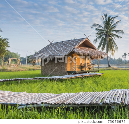The rural atmosphere in Thailand, the rice fields in the morning with the sunrise and the beautiful sky, suitable for use in various media advertising in Thailand tourism 73076673