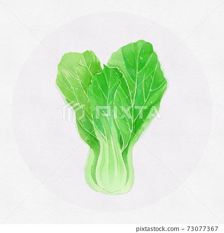 水彩風小清新蔬菜油菜 73077367
