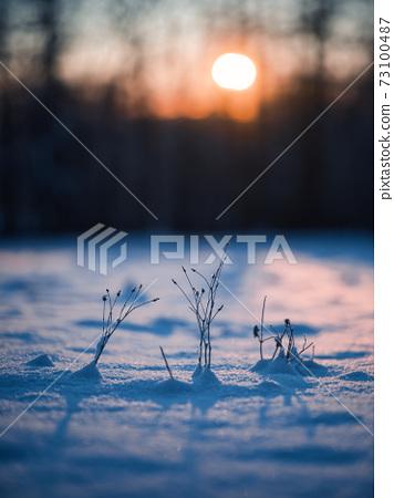 冬季日出和植物 73100487