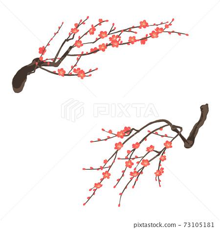 Red plum plum blossom vector illustration 73105181