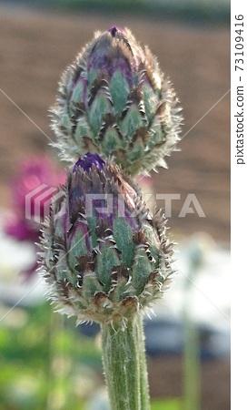 flower 73109416