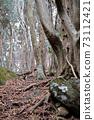 forest on Mount Tsukuba in Ibaraki prefecture, Japan 73112421