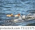繡球在神戶川海灘碼頭附近游泳 73122375