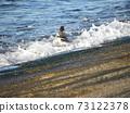 繡球在神戶川海灘碼頭附近游泳 73122378