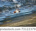 八仙川海灘碼頭上的繡球花 73122379