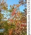色彩繽紛的冬天Nankinhaze 73122381