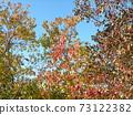 色彩繽紛的冬天Nankinhaze 73122382