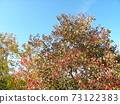 色彩繽紛的冬天Nankinhaze 73122383