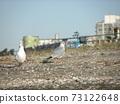 漫步在瀨戶川海灘的尤里海鷗 73122648