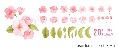 Spring sakura cherry blooming flowers. Isolated realistic pink petals, blossom, branches, leaves vector set 73125934