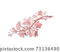 櫻花樹枝的水彩插圖 73136490