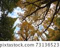 Jingu Ginkgo Trees Ginkgo Trees 73136523