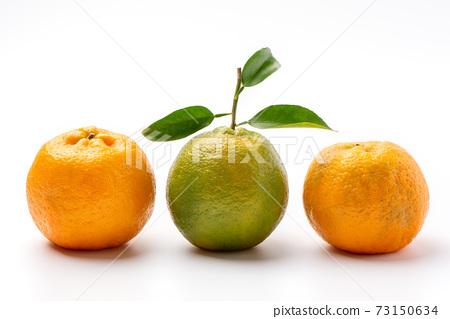橘子 柳橙 去背 裁剪路徑 orange isolated 蜜柑みかん 切り抜き 73150634