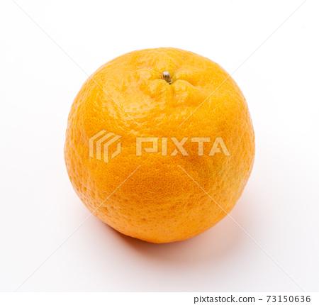 橘子 柳橙 去背 裁剪路徑 orange isolated 蜜柑みかん 切り抜き 73150636