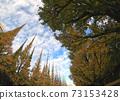 Jingu Ginkgo Trees Ginkgo Trees 73153428