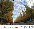 Jingu Ginkgo Namiki Autumn scenery 73153429
