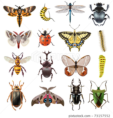 Insects Icons Set 73157552
