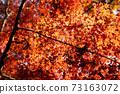 秋葉在秋天 73163072