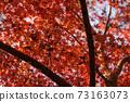 秋葉在秋天 73163073
