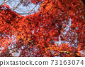 秋葉在秋天 73163074