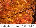 秋葉在秋天 73163075