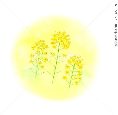 Rape flower watercolor illustration 73165119