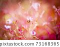 히메후우로과 밝은 빨강 핑크 노랑 검정 계 백 73168365