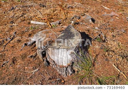 Felled stump 73169460