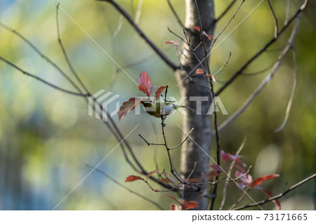 Winter white-eye staying on a deciduous tree branch looking for food 73171665