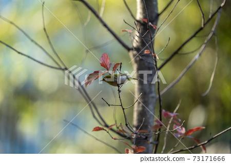 冬日二郎住在倒下的樹枝上,尋找食物 73171666