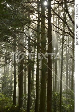 (에코 이미지) 빛 비치는 숲 73180829