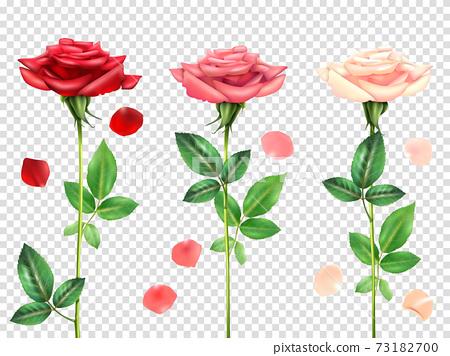 Realistic Roses Set 73182700