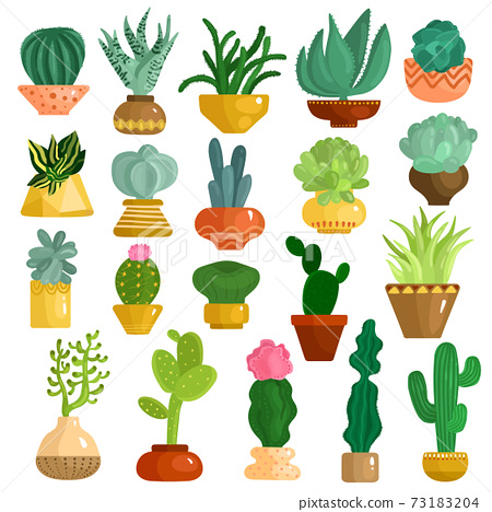 Cacti Succulents In Pots Set 73183204