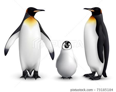 Penguin Realistic Set 73185184