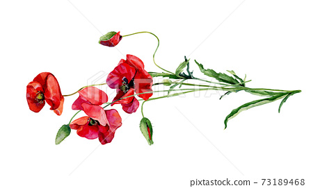Horizontal bouquet of scarlet poppies on a white background 73189468