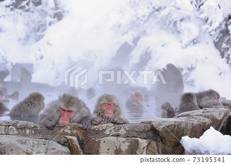 採取在猴子Jigokudani猴子公園 73195341