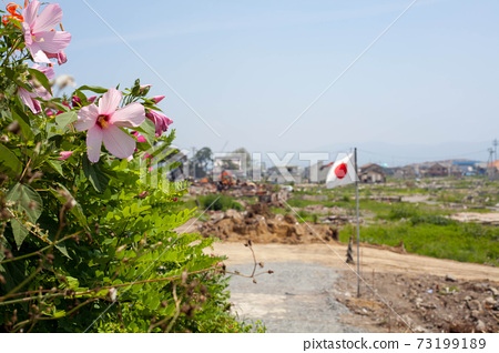 Hibiscus blooming in the disaster area of Ishinomaki and the fluttering Japanese flag 73199189